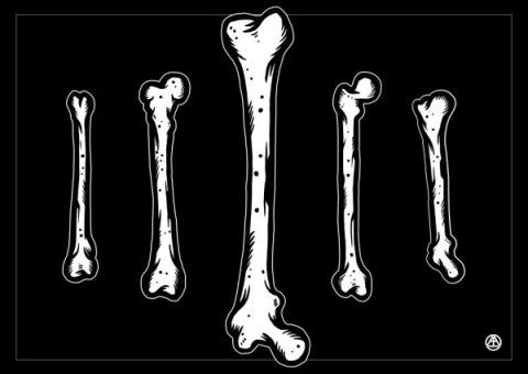 previewproduct_1000x707_bones